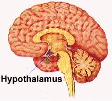 hypothalamus acupuncture continuing education CEUs